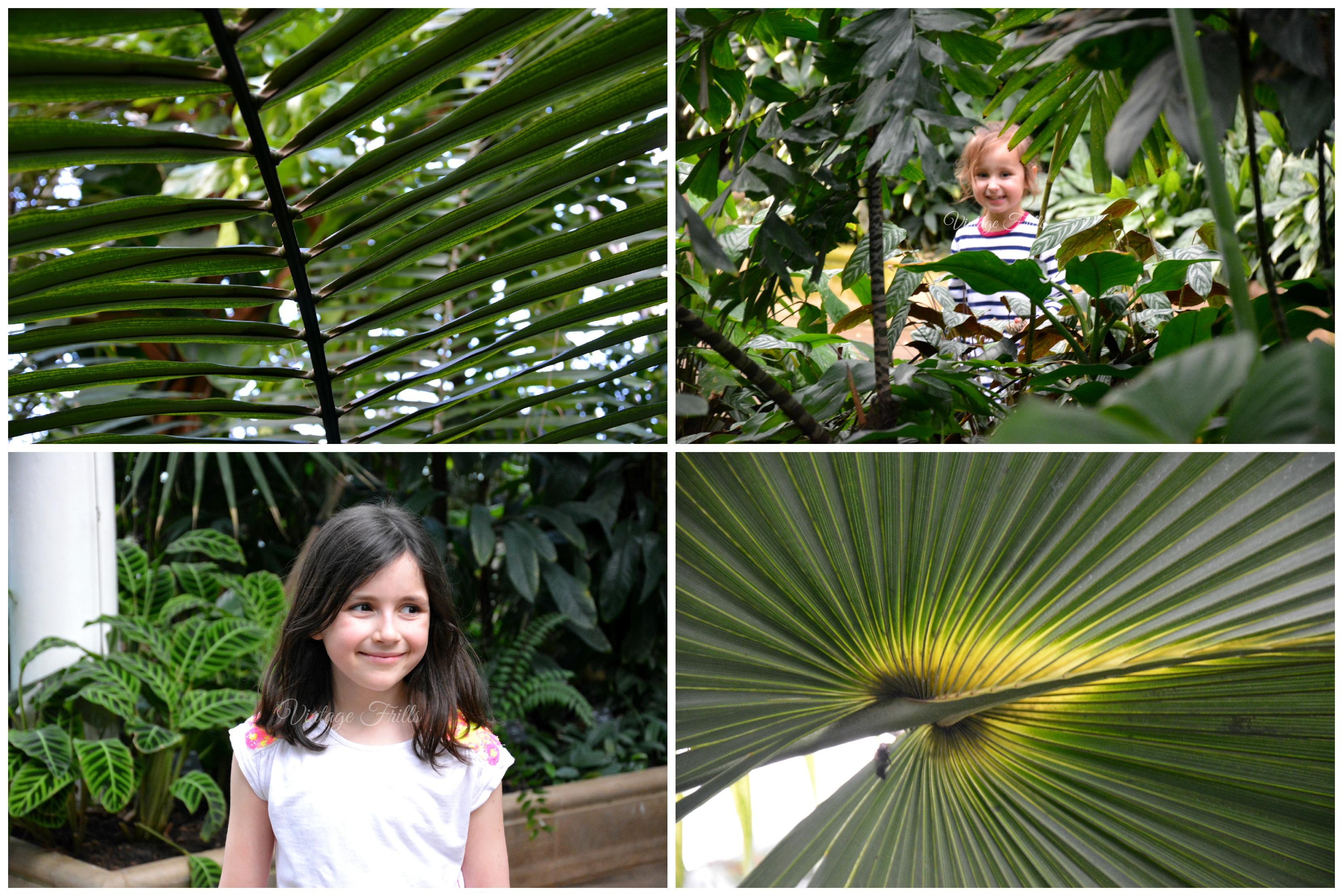Kew Gardens Giant Leaves