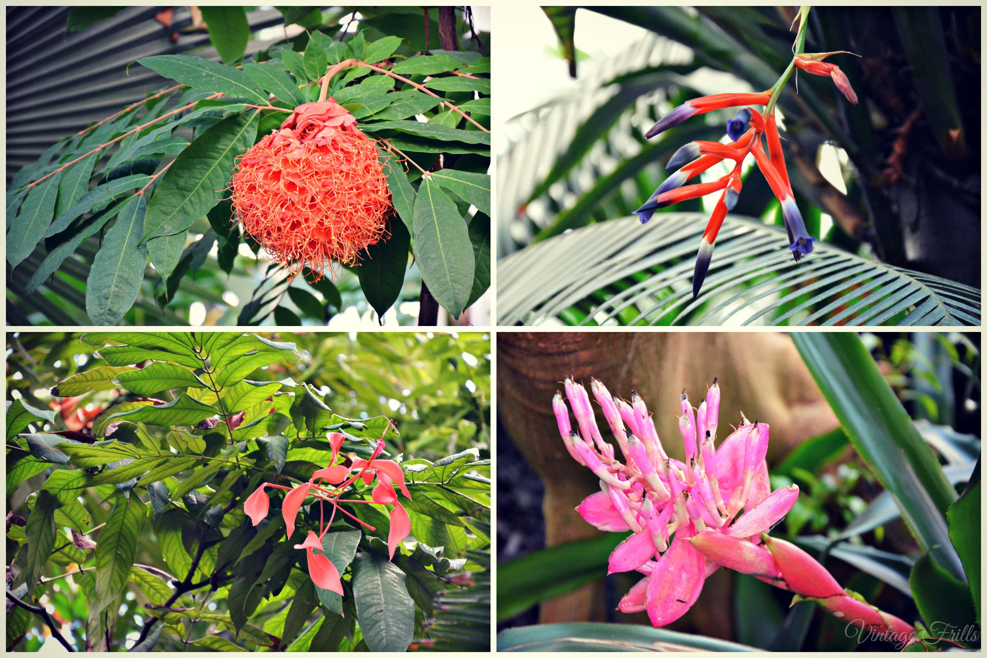 Kew Gardens Palm House Flowers