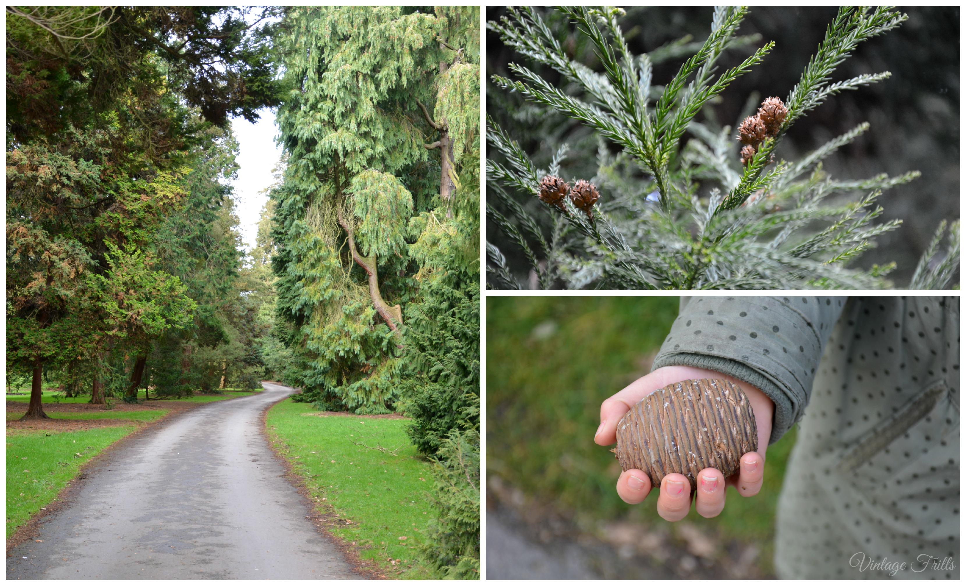 Kew Gardens Pine Trees