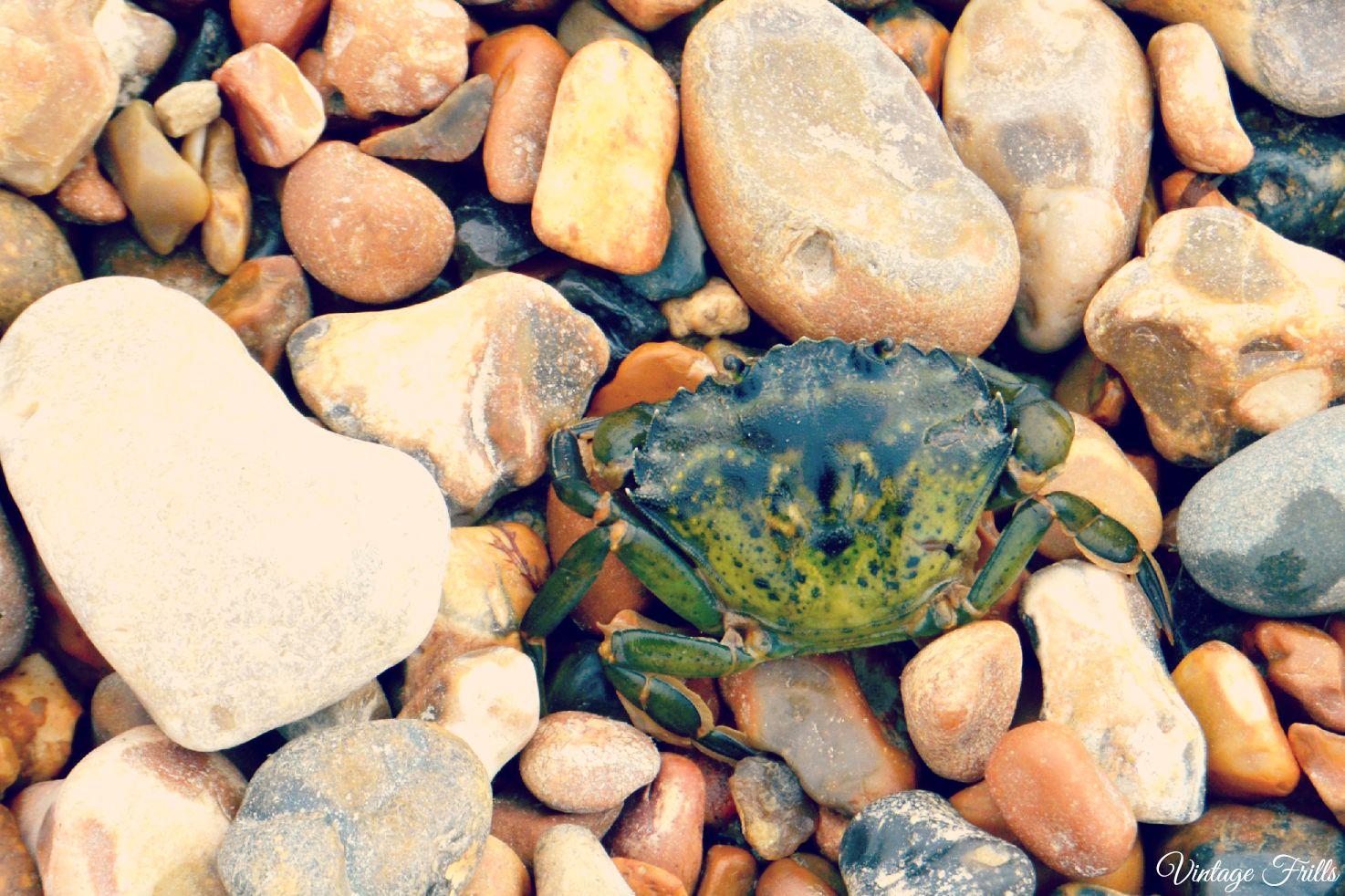 Rockpooling Crab